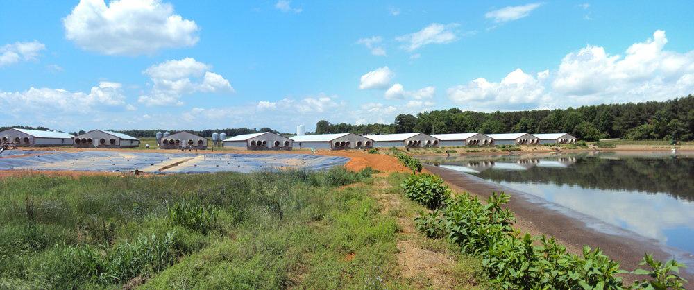 Swine Farm Photo 1